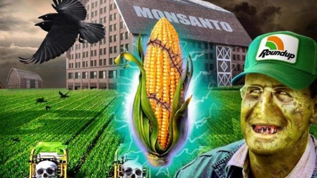 monsantotransg