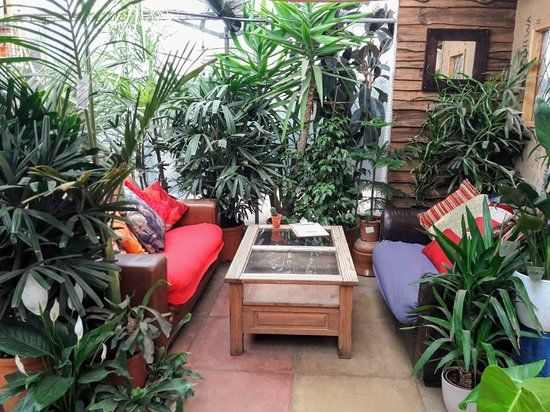 urban-jungle-cafe-comfy