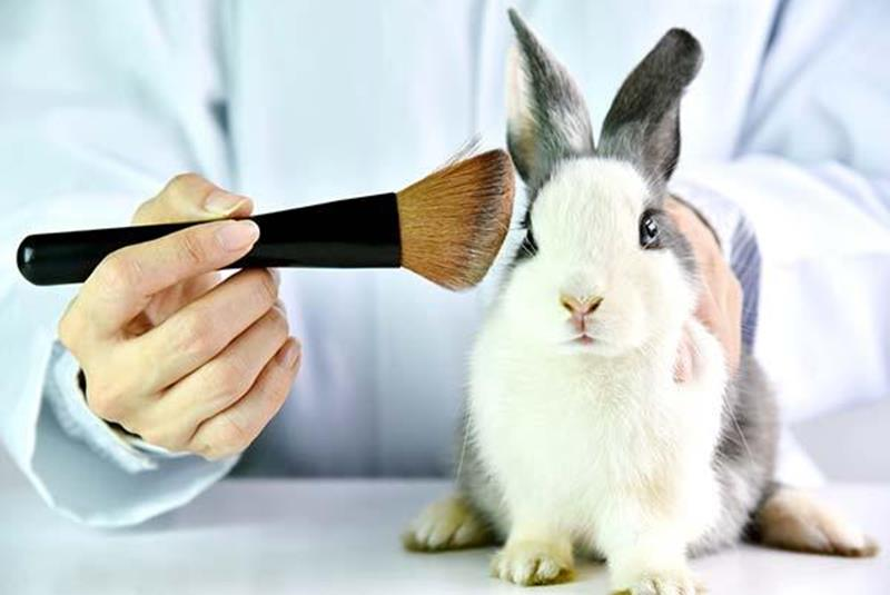 test animales cosmeticos