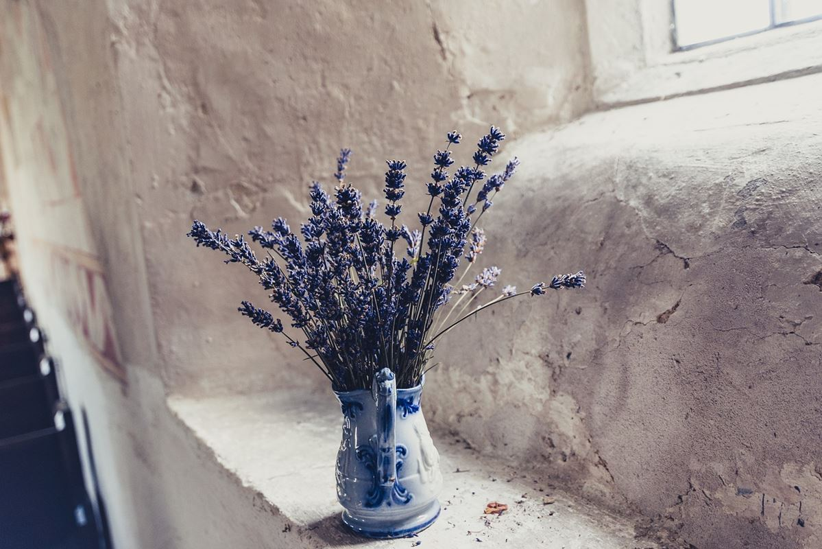 lavanda decoración
