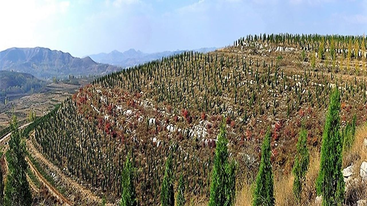 Reforestación en China